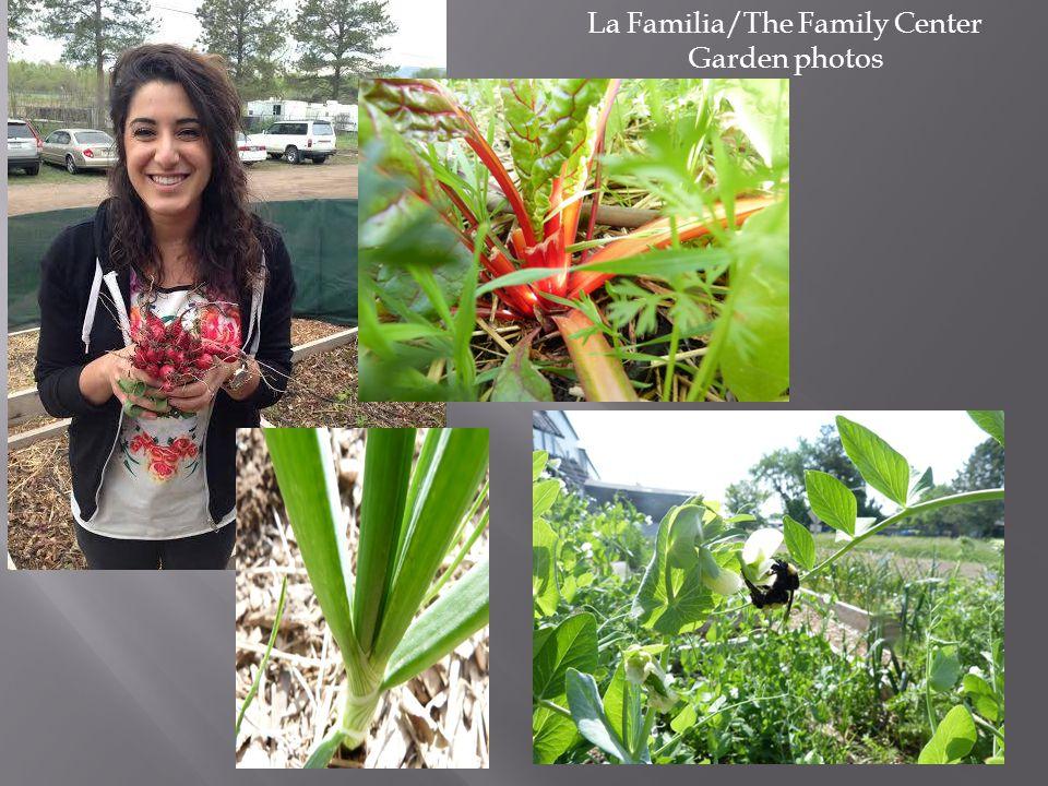 La Familia/The Family Center Garden photos