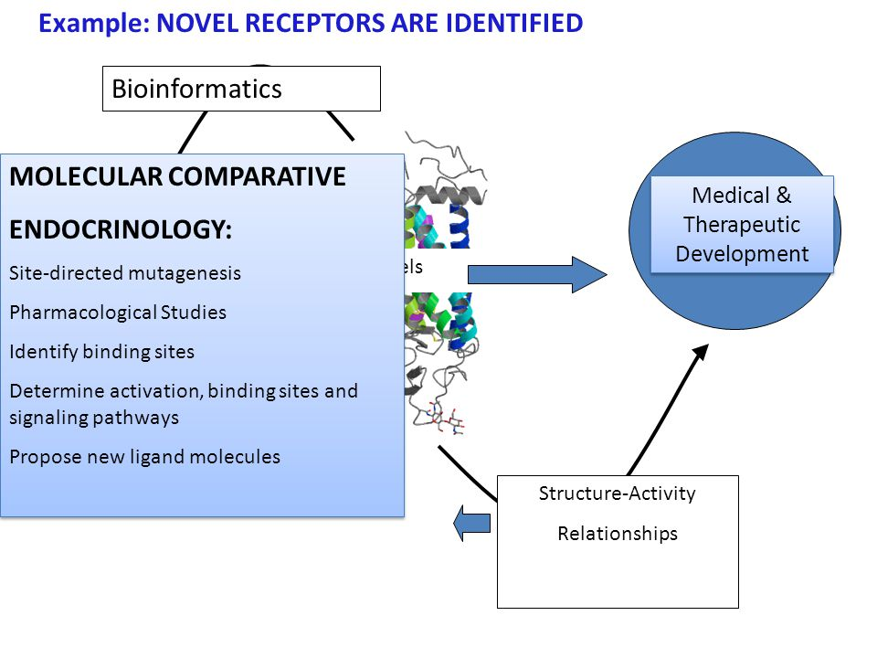 Comparative Endocinology Basic, Applied and Therapeutic/Medical Models Discovery of Novel Hormones and Signaling pathways; Discovery of New Pharmaceuticals to treat human disease; Hormonally based strategies for pest control; Development of Endocrinomics —high through put analysis Discovery of Novel Hormones and Signaling pathways; Discovery of New Pharmaceuticals to treat human disease; Hormonally based strategies for pest control; Development of Endocrinomics —high through put analysis Support New Key/alternate model organisms in evolution; Mechanisms of Evolution via genome discoveries Research Cooperative Networks Support New Key/alternate model organisms in evolution; Mechanisms of Evolution via genome discoveries Research Cooperative Networks Highlight Cutting Edge Discoveries Implementation of Grand Challenges in Comparative Endocrinology Dissemination of Information to public; scientists Comparative Endocrinology