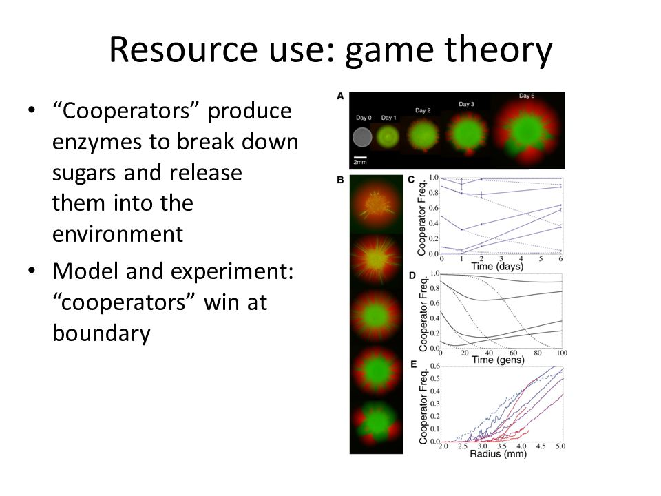 Resource use: game theory Cooperators produce enzymes to break down sugars and release them into the environment Model and experiment: cooperators win at boundary