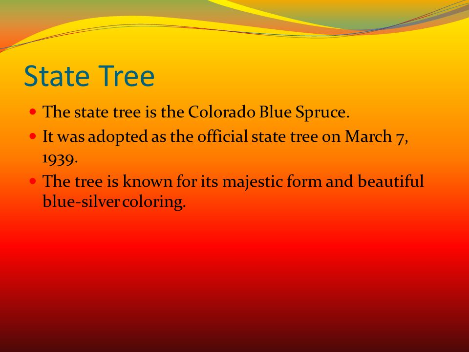 State Tree The state tree is the Colorado Blue Spruce. It was adopted as the official state tree on March 7, 1939. The tree is known for its majestic