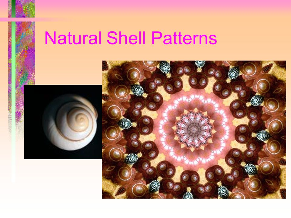 Natural Shell Patterns