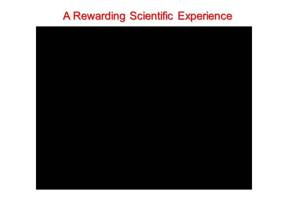 A Rewarding Scientific Experience