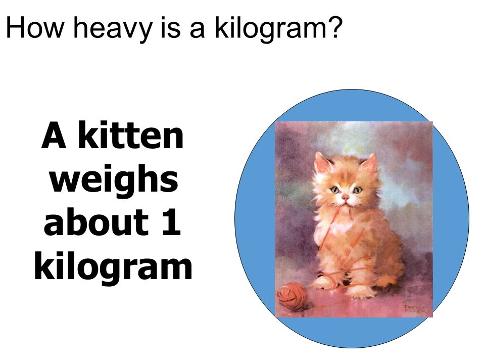 How heavy is a kilogram? A kitten weighs about 1 kilogram