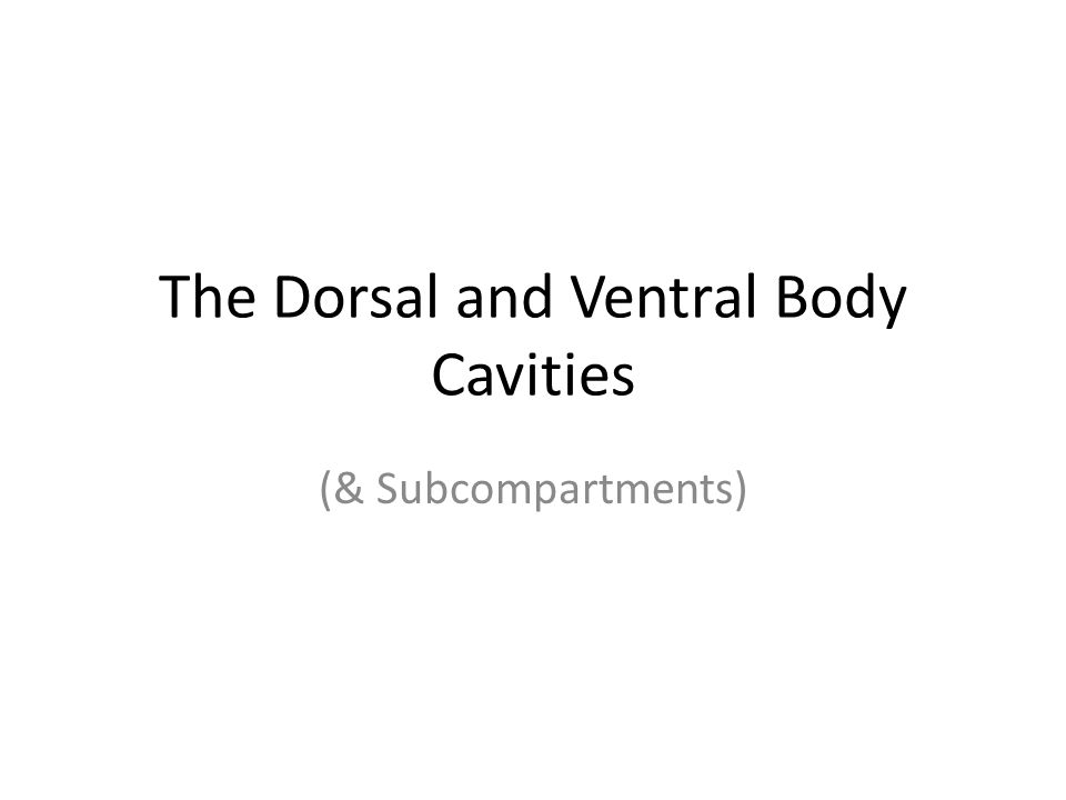 The Dorsal and Ventral Body Cavities (& Subcompartments)