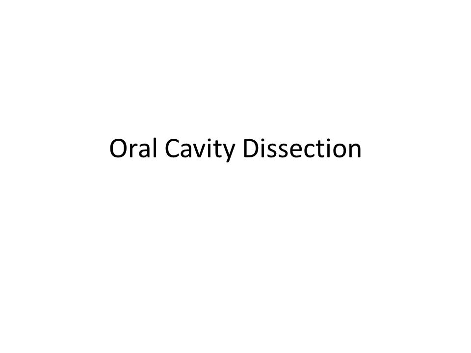 Oral Cavity Dissection