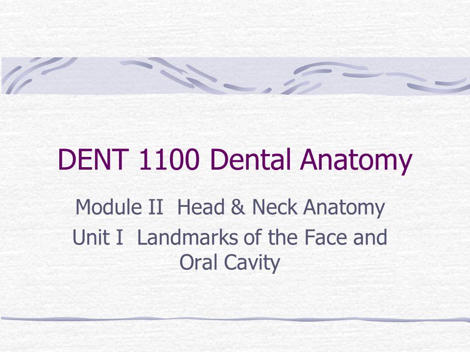 Oral Cavity Landmarks Frenum/frena