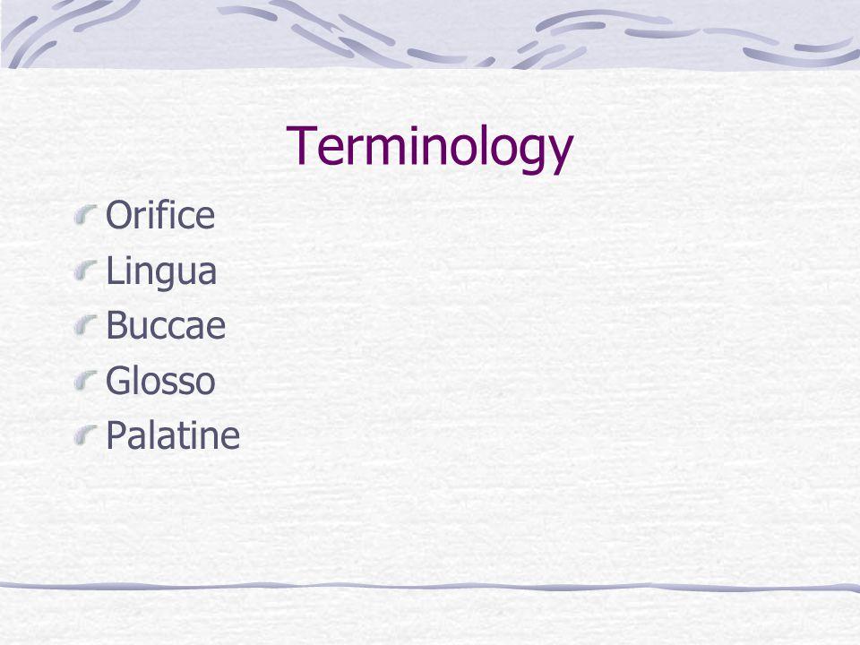 Terminology Orifice Lingua Buccae Glosso Palatine