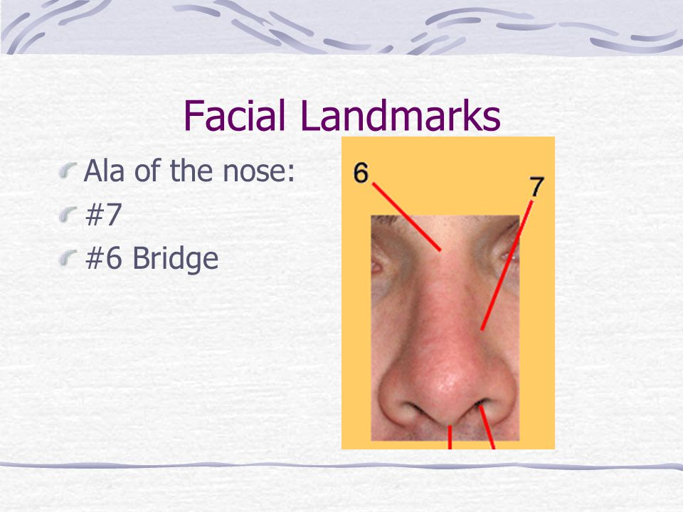 Facial Landmarks Ala of the nose: #7 #6 Bridge