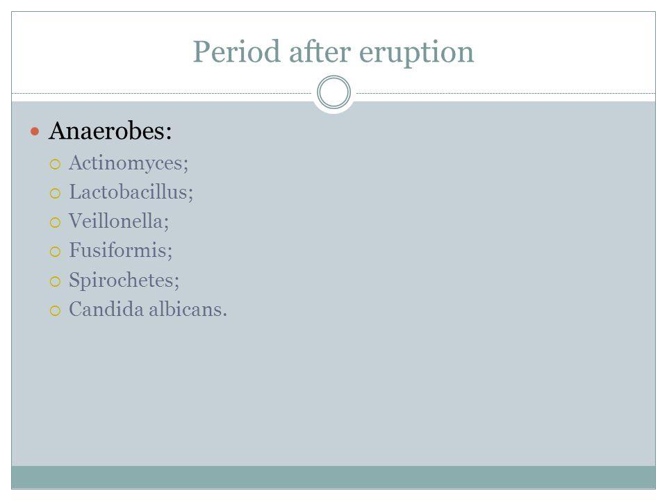 Period after eruption Anaerobes:  Actinomyces;  Lactobacillus;  Veillonella;  Fusiformis;  Spirochetes;  Candida albicans.