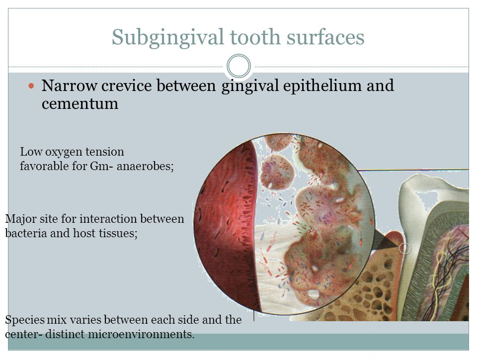 Subgingival tooth surfaces Narrow crevice between gingival epithelium and cementum Low oxygen tension favorable for Gm- anaerobes; Major site for interaction between bacteria and host tissues; Species mix varies between each side and the center- distinct microenvironments.