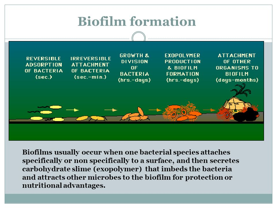 Biofilm formation Biofilms usually occur when one bacterial species attaches specifically or non specifically to a surface, and then secretes carbohydrate slime (exopolymer) that imbeds the bacteria and attracts other microbes to the biofilm for protection or nutritional advantages.