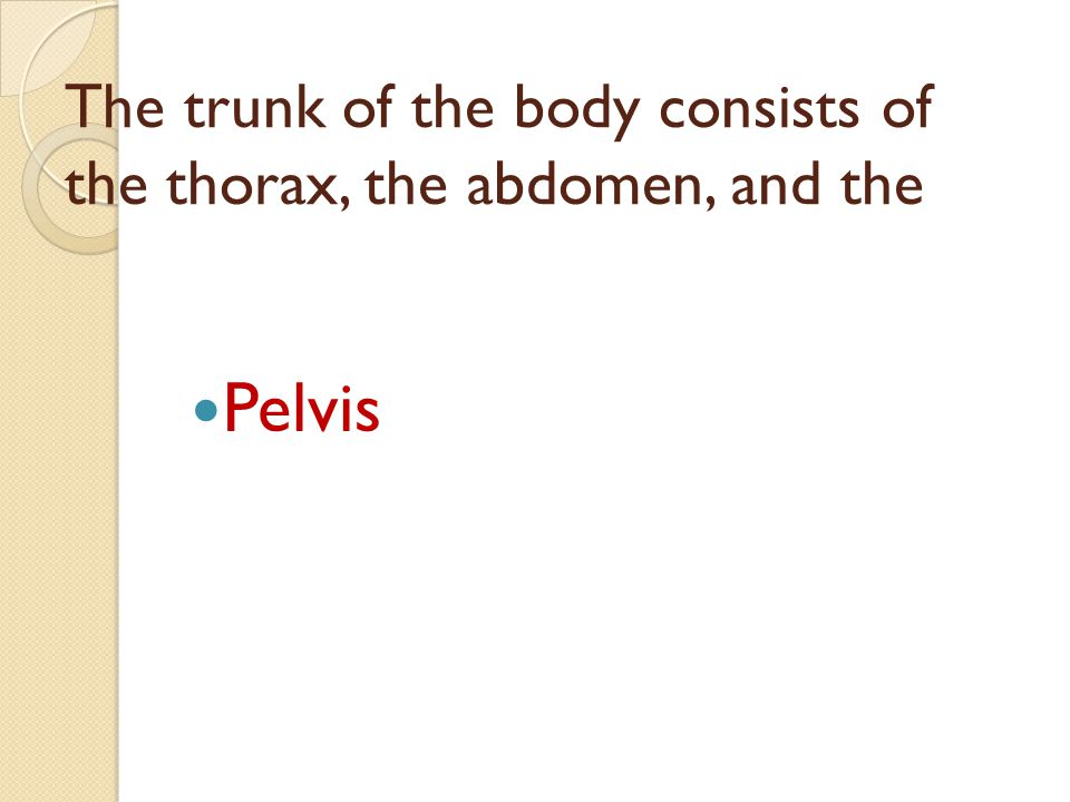 The trunk of the body consists of the thorax, the abdomen, and the Pelvis
