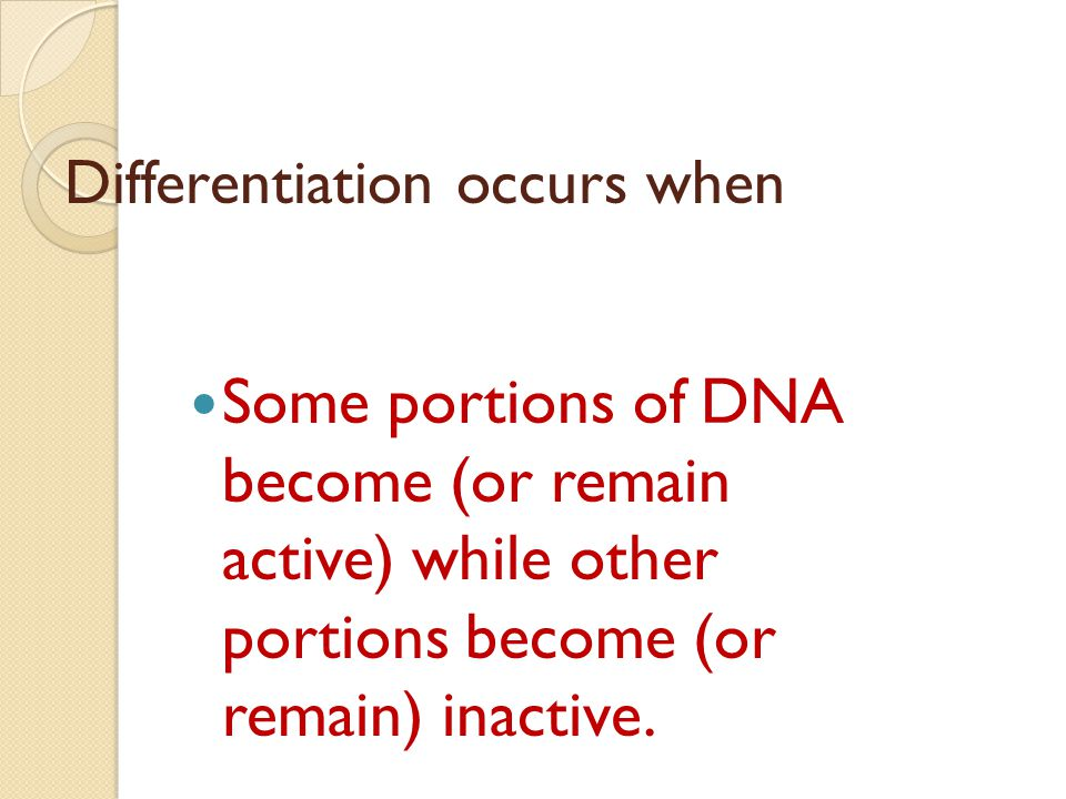 Differentiation occurs when Some portions of DNA become (or remain active) while other portions become (or remain) inactive.