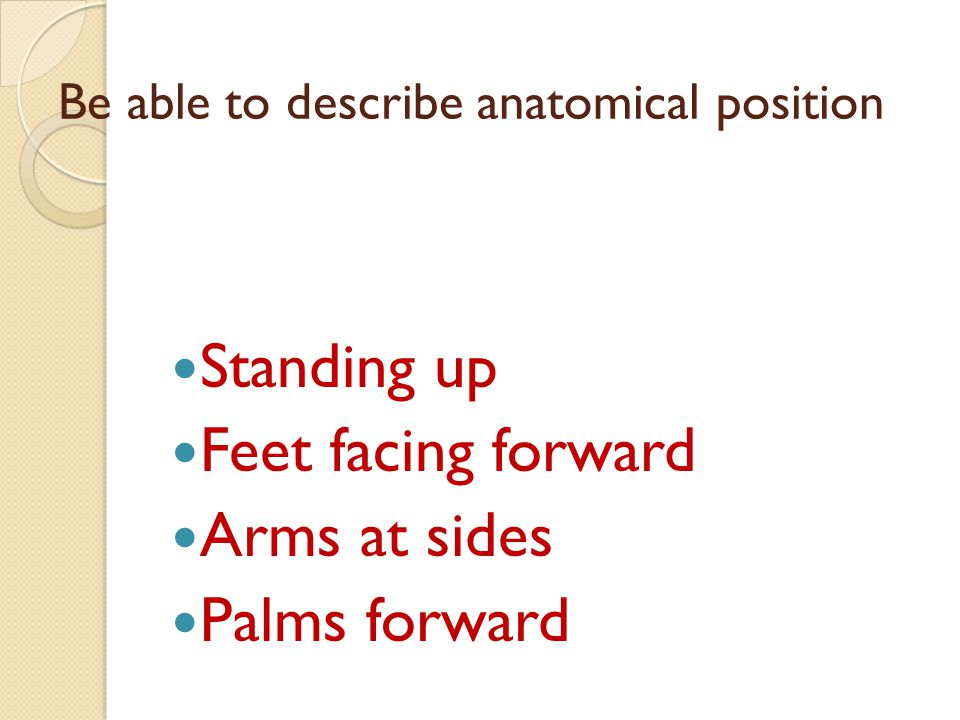 Be able to describe anatomical position Standing up Feet facing forward Arms at sides Palms forward