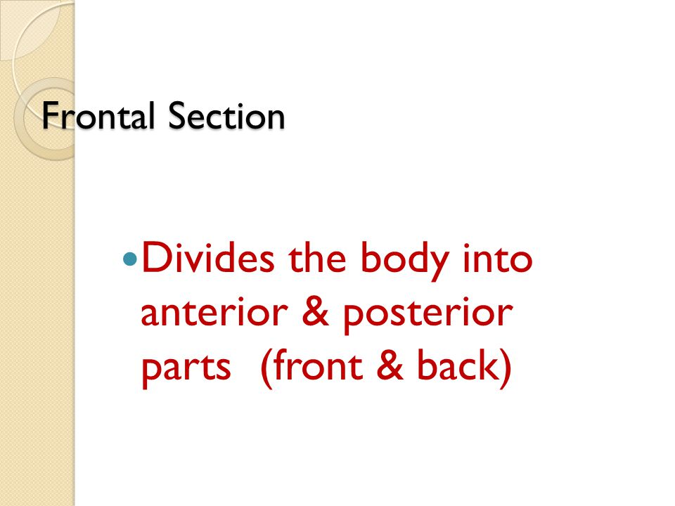 Frontal Section Divides the body into anterior & posterior parts (front & back)