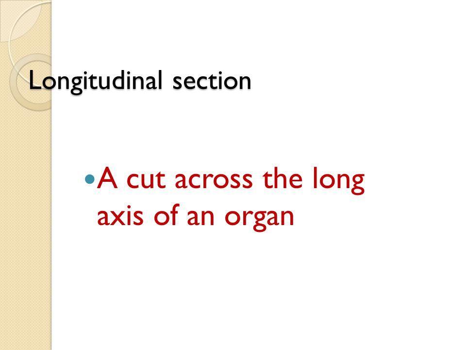 Longitudinal section A cut across the long axis of an organ