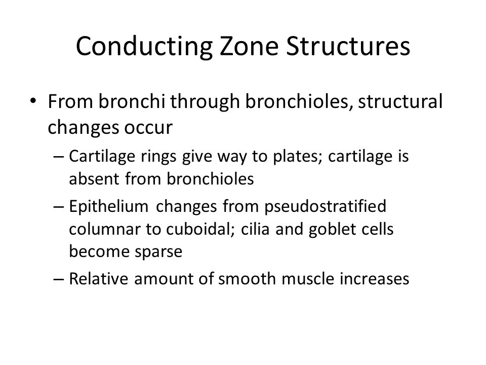 Conducting Zone Structures From bronchi through bronchioles, structural changes occur – Cartilage rings give way to plates; cartilage is absent from b
