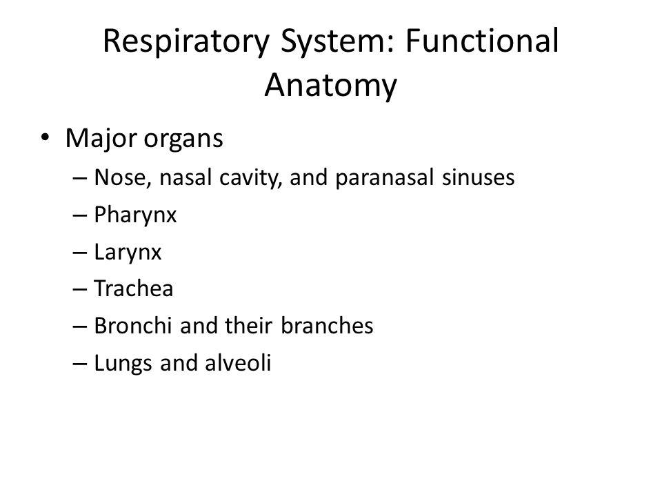 Respiratory System: Functional Anatomy Major organs – Nose, nasal cavity, and paranasal sinuses – Pharynx – Larynx – Trachea – Bronchi and their branc