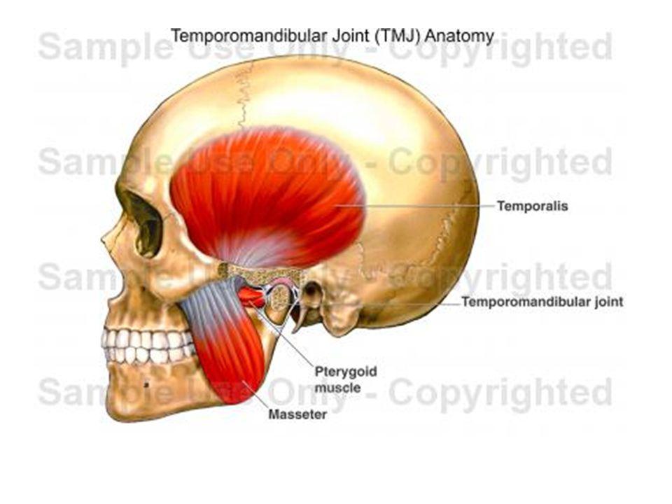 Teeth Deciduous teeth, permanent teeth 8 per maxilla/ mandible:2 incisors,1 canine, 2 premolars, 3 molars