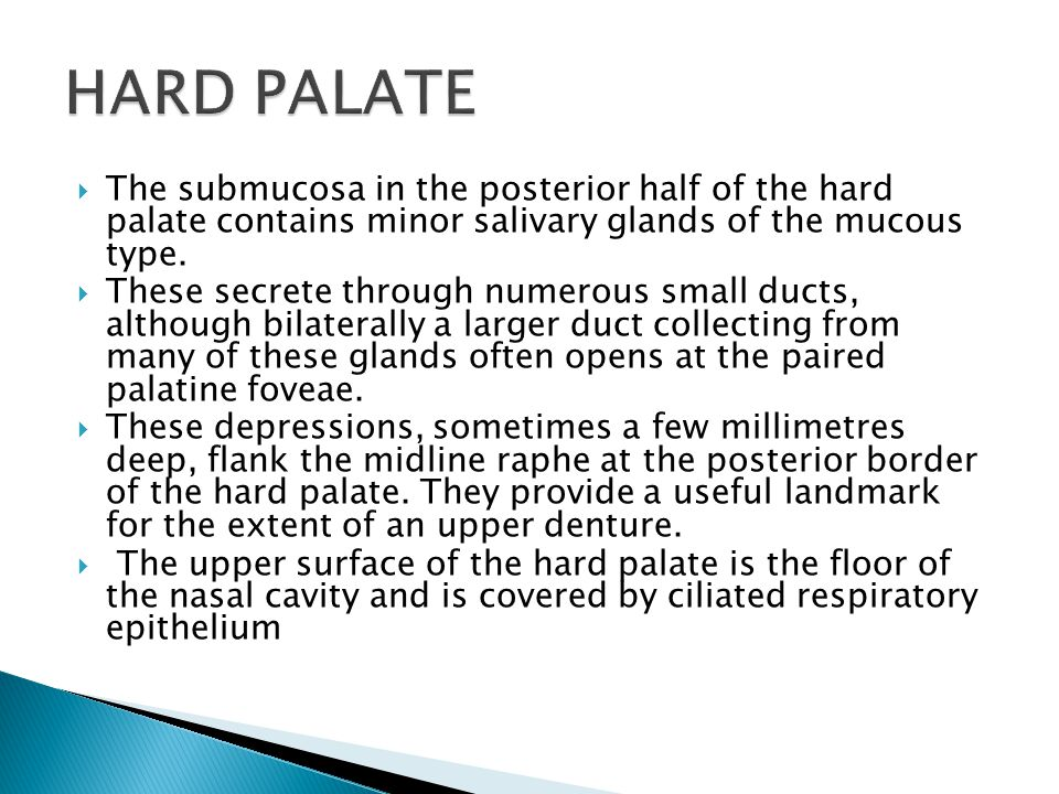  The submucosa in the posterior half of the hard palate contains minor salivary glands of the mucous type.