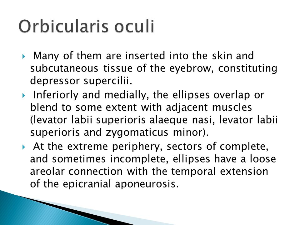  Many of them are inserted into the skin and subcutaneous tissue of the eyebrow, constituting depressor supercilii.