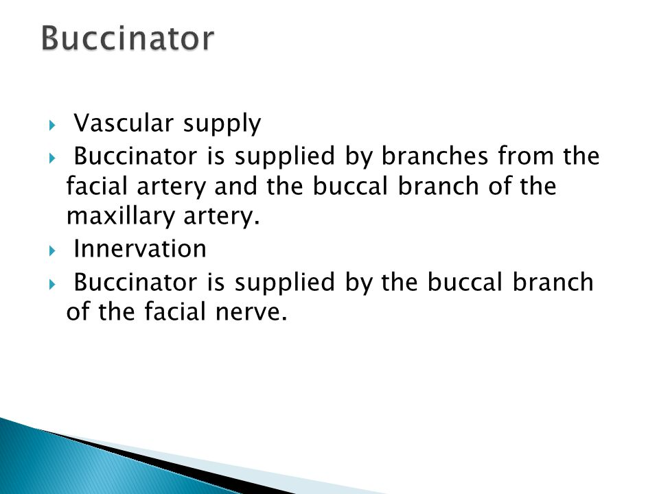  Vascular supply  Buccinator is supplied by branches from the facial artery and the buccal branch of the maxillary artery.