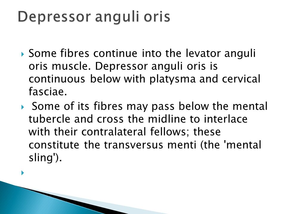  Some fibres continue into the levator anguli oris muscle.