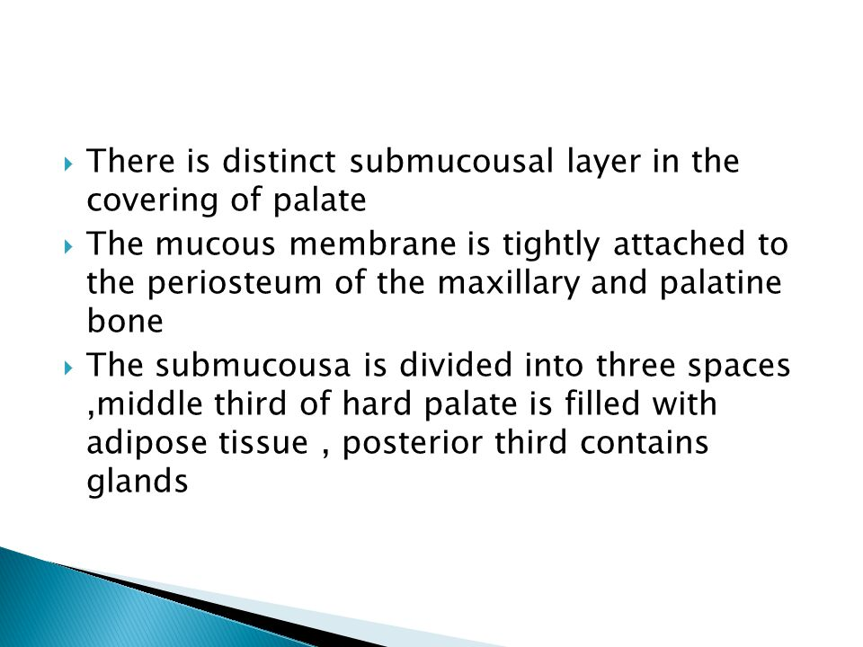  There is distinct submucousal layer in the covering of palate  The mucous membrane is tightly attached to the periosteum of the maxillary and palatine bone  The submucousa is divided into three spaces,middle third of hard palate is filled with adipose tissue, posterior third contains glands