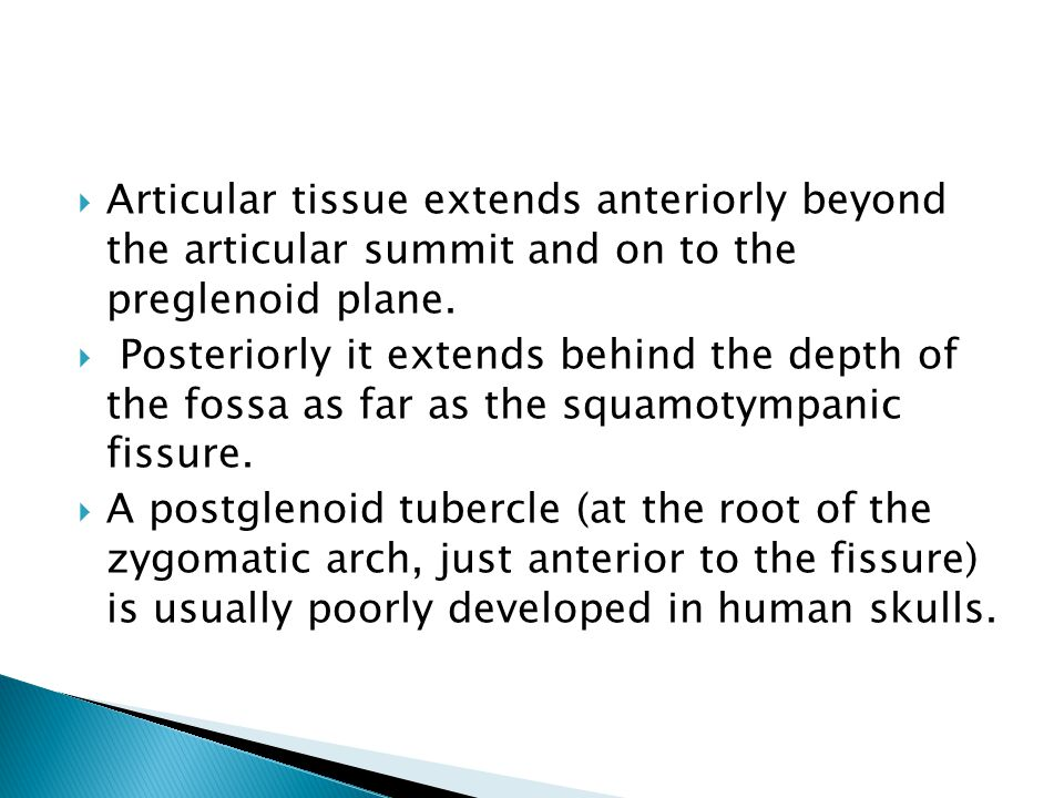  Articular tissue extends anteriorly beyond the articular summit and on to the preglenoid plane.