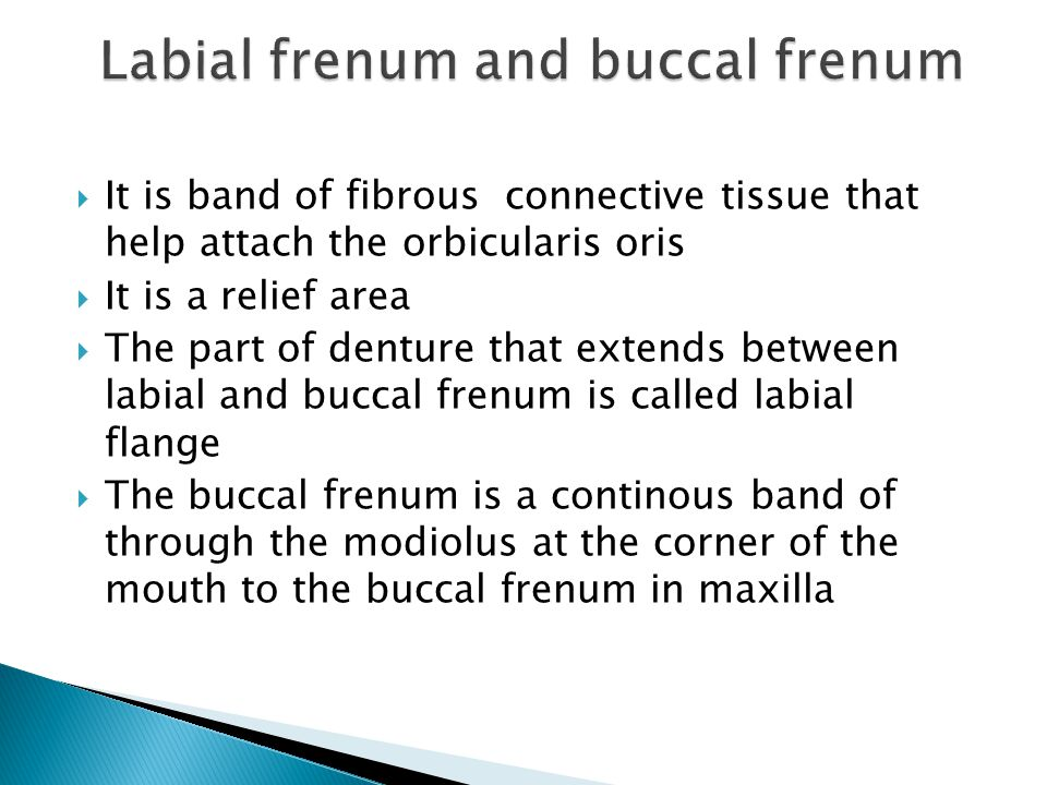  It is band of fibrous connective tissue that help attach the orbicularis oris  It is a relief area  The part of denture that extends between labial and buccal frenum is called labial flange  The buccal frenum is a continous band of through the modiolus at the corner of the mouth to the buccal frenum in maxilla
