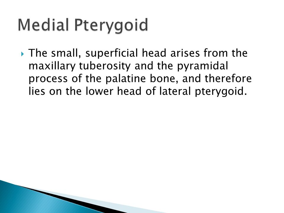  The small, superficial head arises from the maxillary tuberosity and the pyramidal process of the palatine bone, and therefore lies on the lower head of lateral pterygoid.