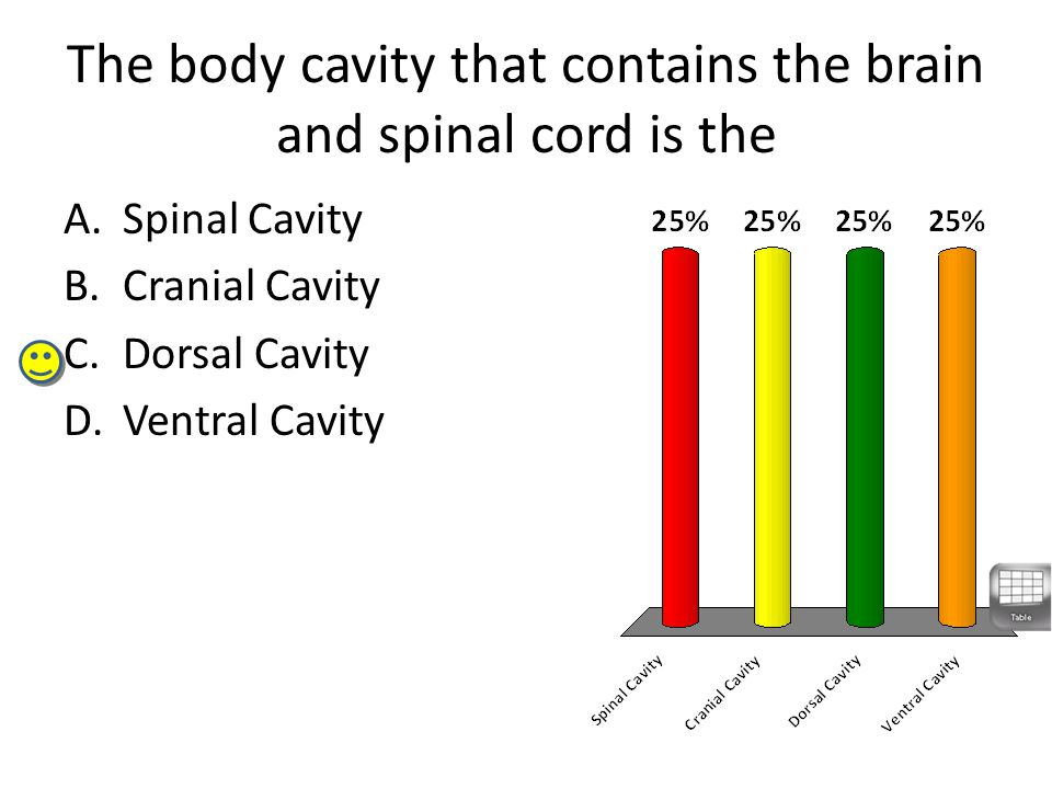 The body cavity that contains the brain and spinal cord is the A.Spinal Cavity B.Cranial Cavity C.Dorsal Cavity D.Ventral Cavity