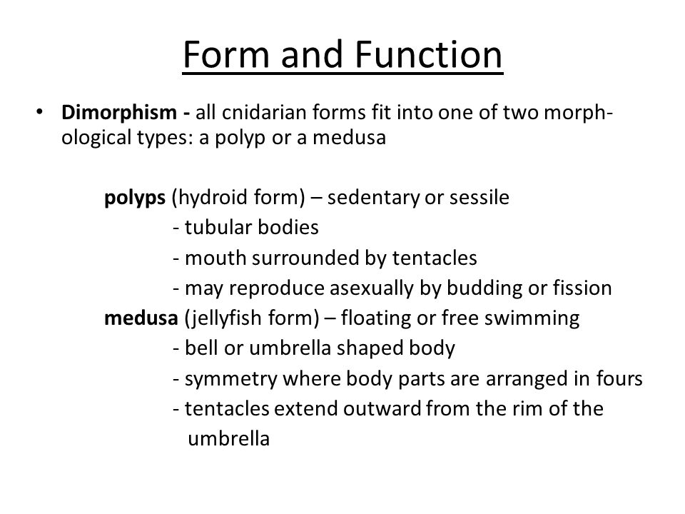 Form and Function Dimorphism - all cnidarian forms fit into one of two morph- ological types: a polyp or a medusa polyps (hydroid form) – sedentary or