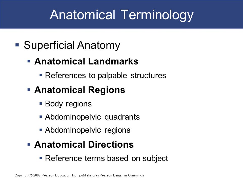 Copyright © 2009 Pearson Education, Inc., publishing as Pearson Benjamin Cummings Anatomical Terminology  Superficial Anatomy  Anatomical Landmarks  References to palpable structures  Anatomical Regions  Body regions  Abdominopelvic quadrants  Abdominopelvic regions  Anatomical Directions  Reference terms based on subject