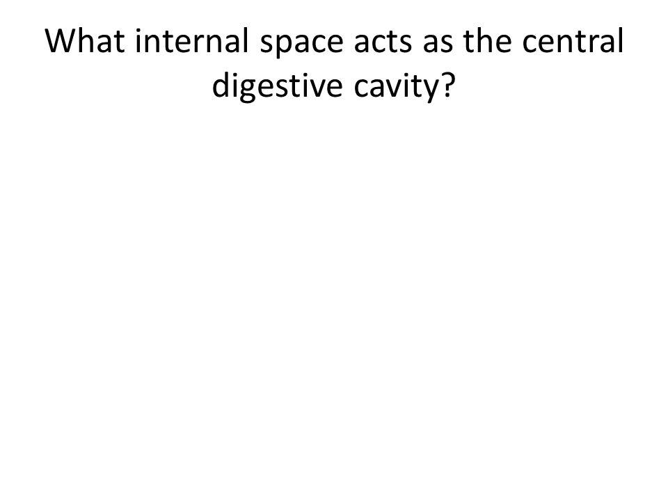 What internal space acts as the central digestive cavity