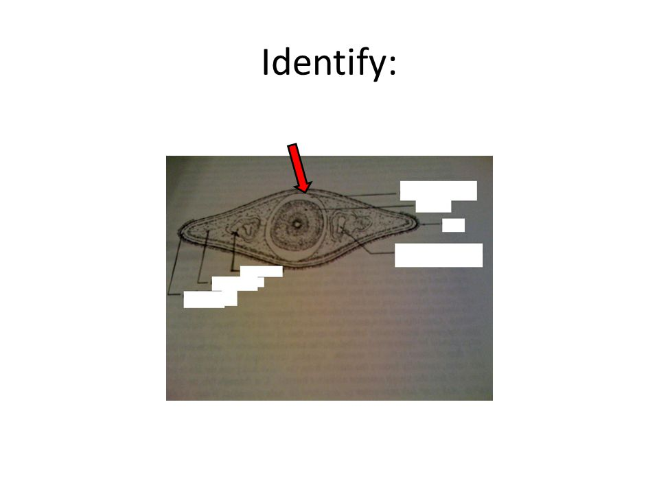 Identify: