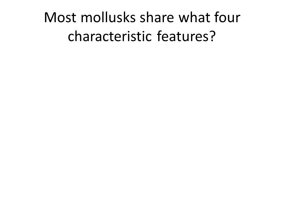 Most mollusks share what four characteristic features