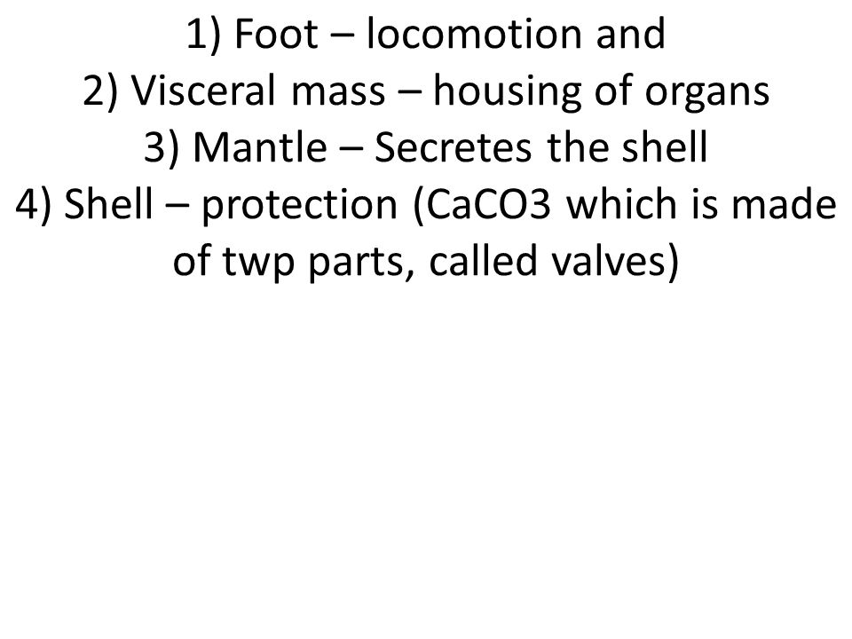 1) Foot – locomotion and 2) Visceral mass – housing of organs 3) Mantle – Secretes the shell 4) Shell – protection (CaCO3 which is made of twp parts, called valves)