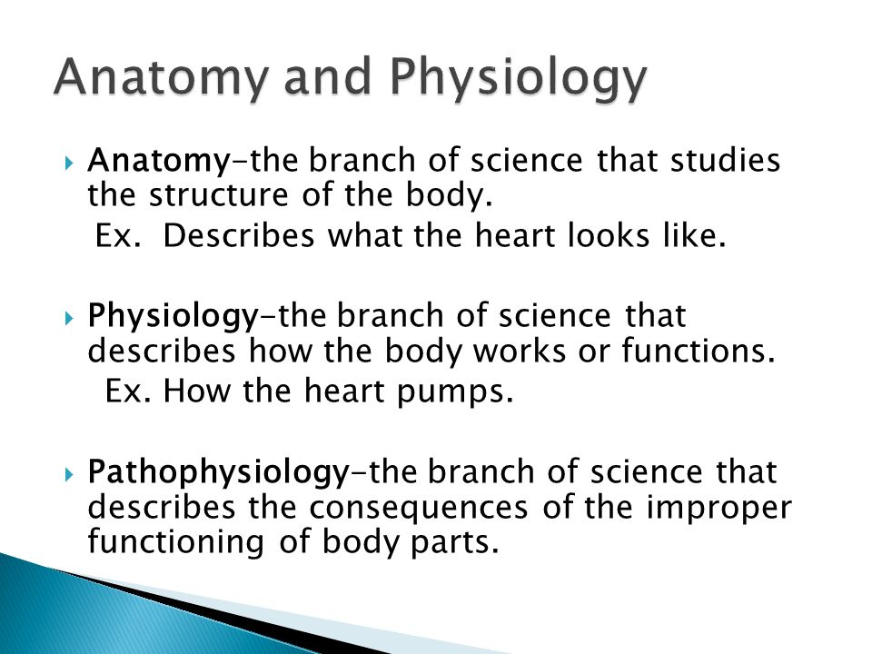  Anatomy-the branch of science that studies the structure of the body.