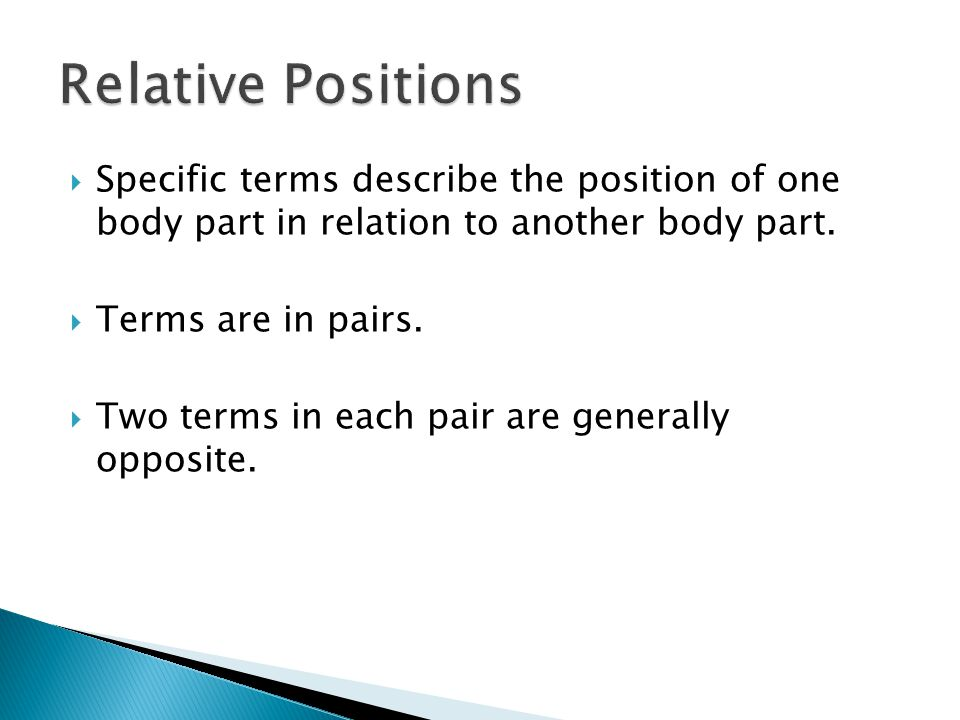  Specific terms describe the position of one body part in relation to another body part.