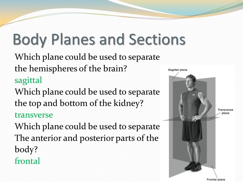 Body Planes and Sections Which plane could be used to separate the hemispheres of the brain.