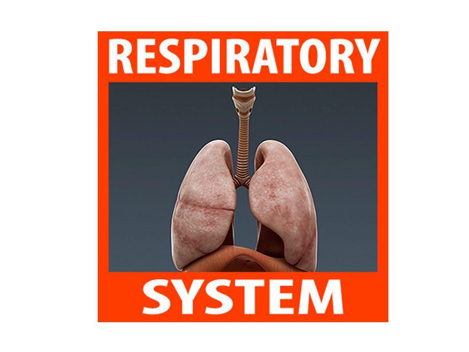 The Mechanism of Breathing http://teachhealthk- 12.uthscsa.edu/curriculum/pulmonary/pulmo nary-breathsimulation.asp http://teachhealthk- 12.uthscsa.edu/curriculum/pulmonary/pulmo nary-breathsimulation.asp (Anatomy of Breathing Flash Animation)