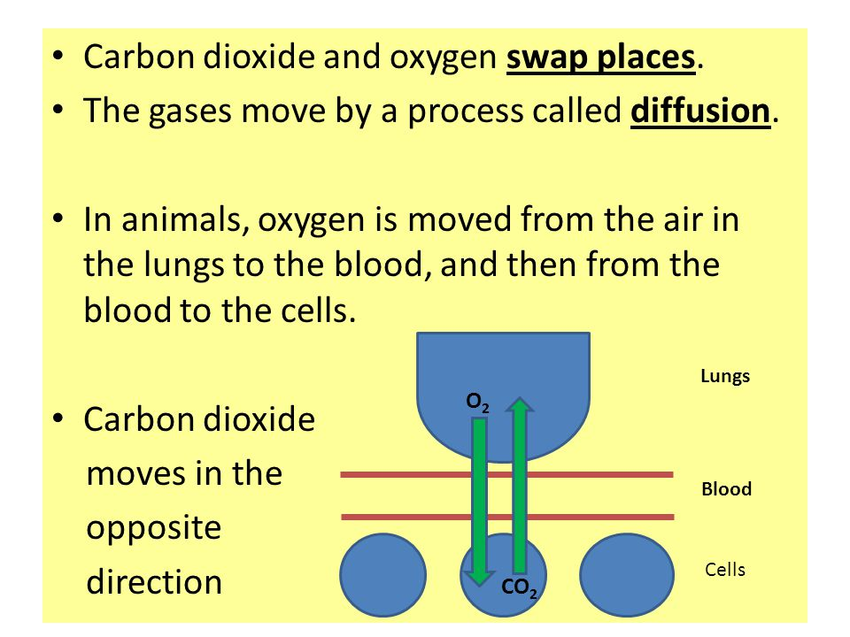 Carbon dioxide and oxygen swap places. The gases move by a process called diffusion. In animals, oxygen is moved from the air in the lungs to the bloo