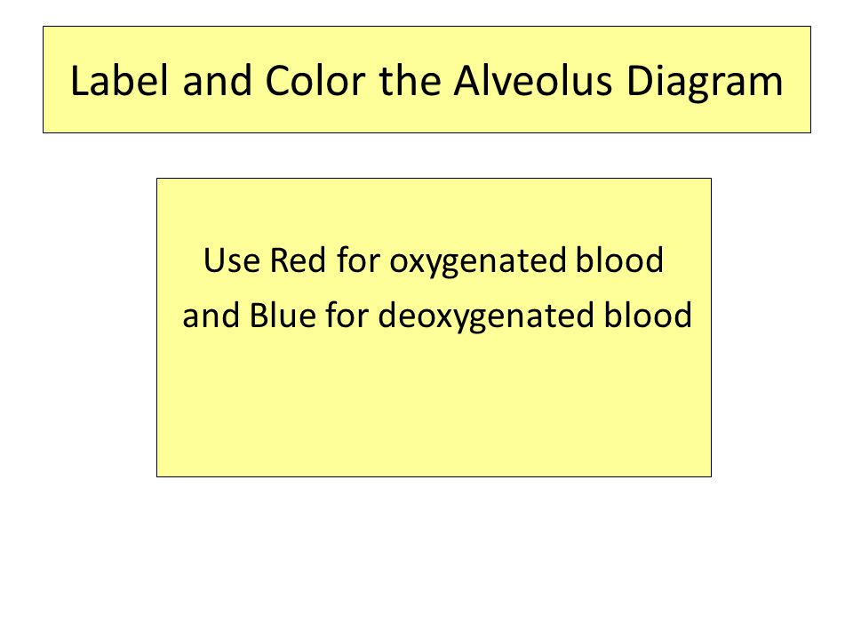 Label and Color the Alveolus Diagram Use Red for oxygenated blood and Blue for deoxygenated blood