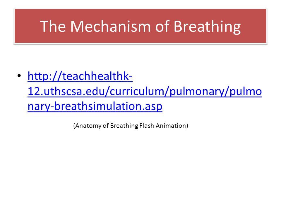The Mechanism of Breathing http://teachhealthk- 12.uthscsa.edu/curriculum/pulmonary/pulmo nary-breathsimulation.asp http://teachhealthk- 12.uthscsa.ed