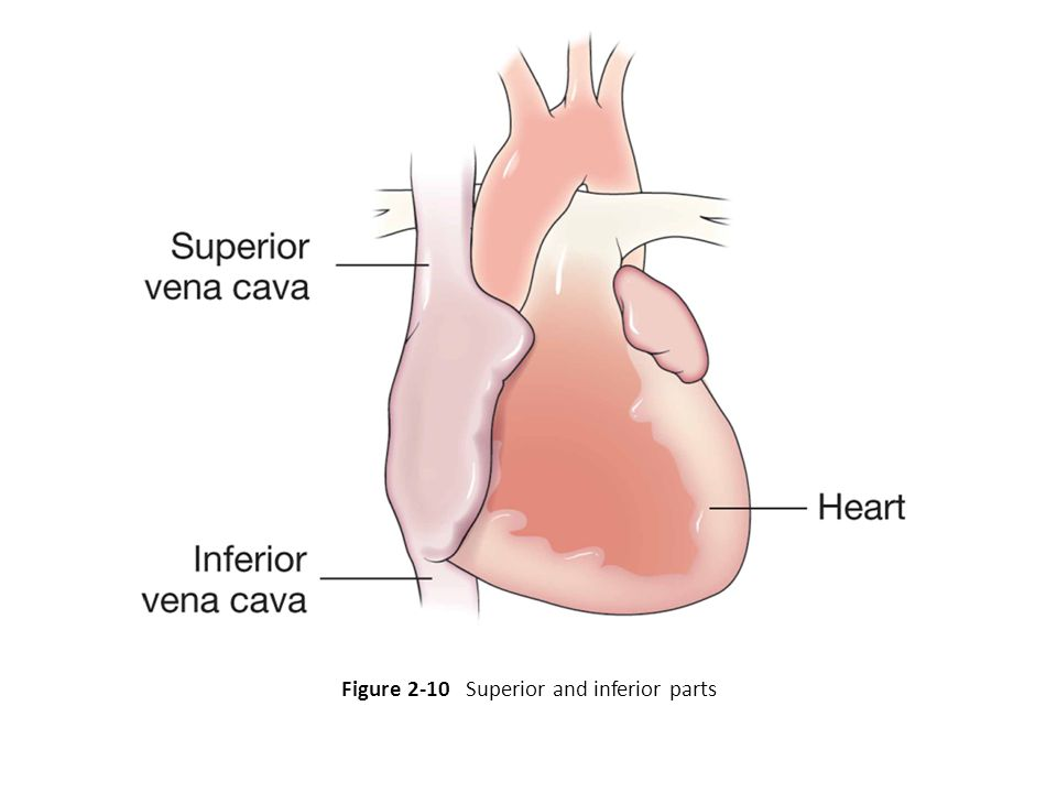 Figure 2-10 Superior and inferior parts
