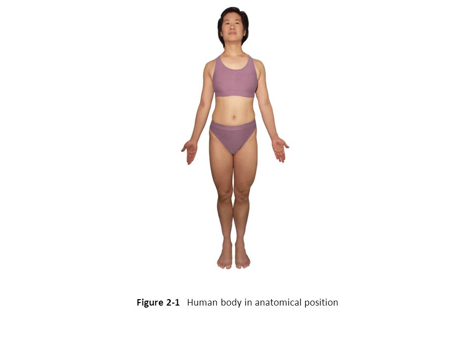 Figure 2-1 Human body in anatomical position