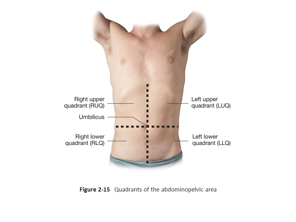 Figure 2-15 Quadrants of the abdominopelvic area