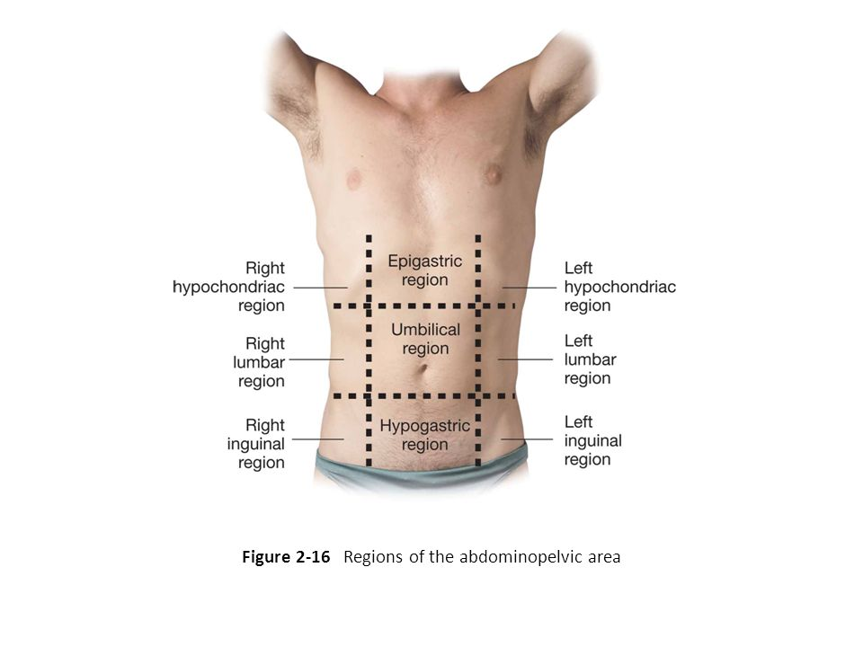 Figure 2-16 Regions of the abdominopelvic area