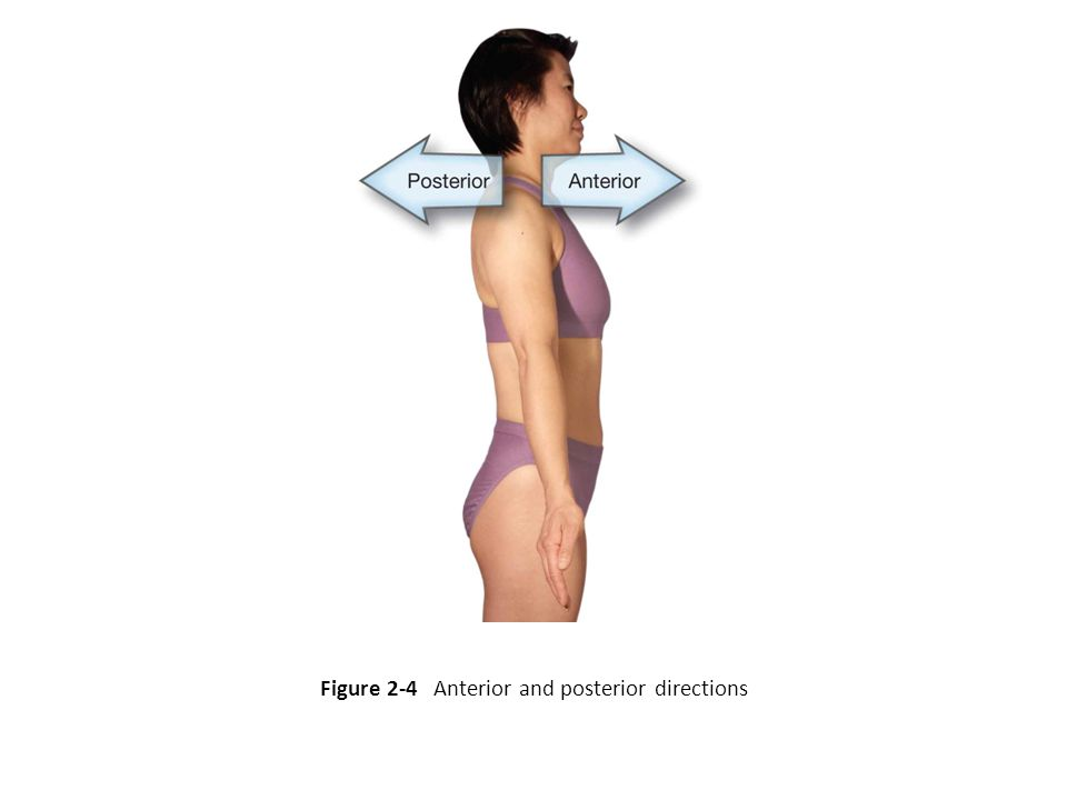 Figure 2-4 Anterior and posterior directions